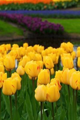 Tulips USA Made